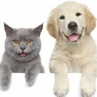 Ulei CBD pentru animale de companie