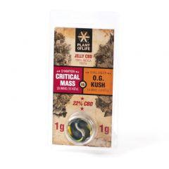 Jelly CBD 22% Critical Mass vs O.G. Kush | 2g