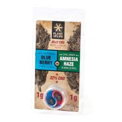 Jelly CBD 22% Blueberry vs Amnesia Haze | 2g
