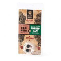 Jelly CBD 22% Sour Diesel vs Amnesia Haze | 2g